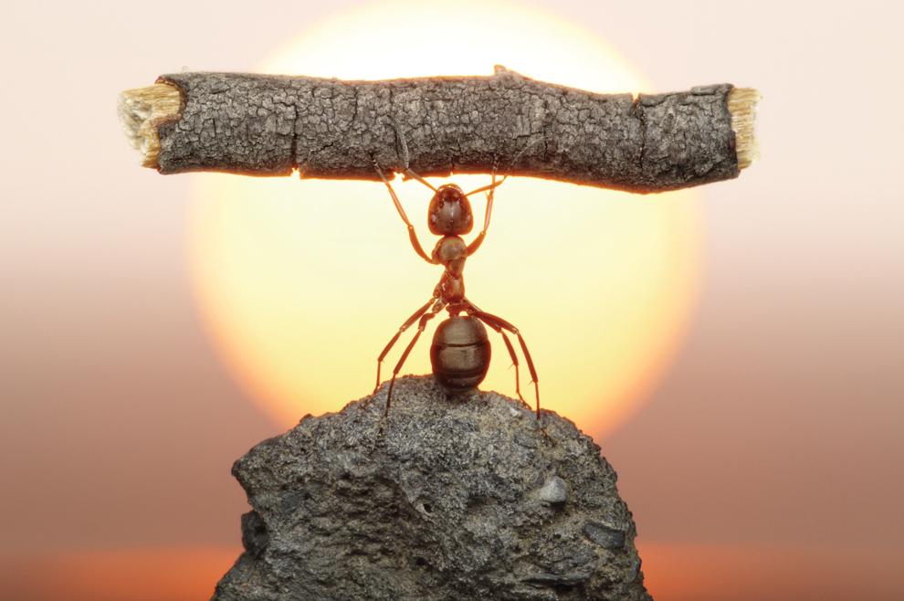 Upornost jednog mrava book evangelizacija