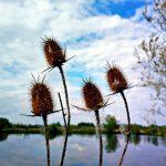 Odraz prirode book evangelizacija