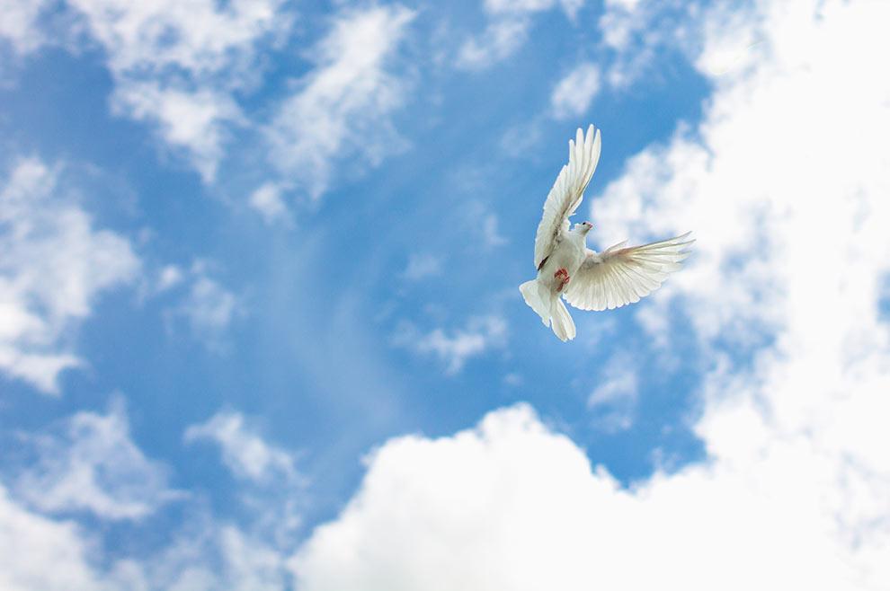 Aleteia: Zašto je golub simbol Duha Svetoga