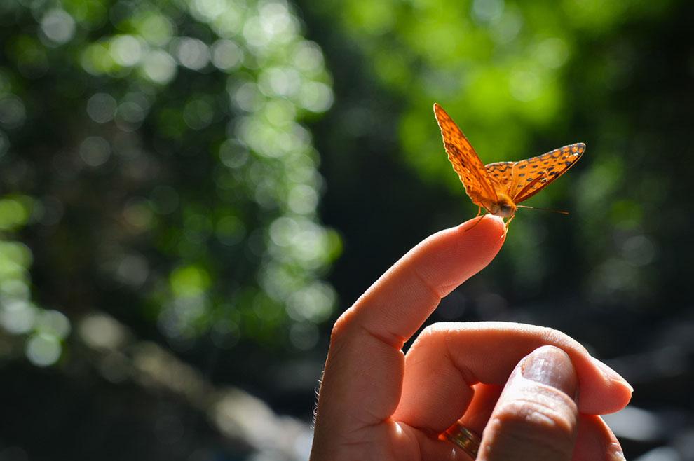 Smrt je samo prvi let leptira…