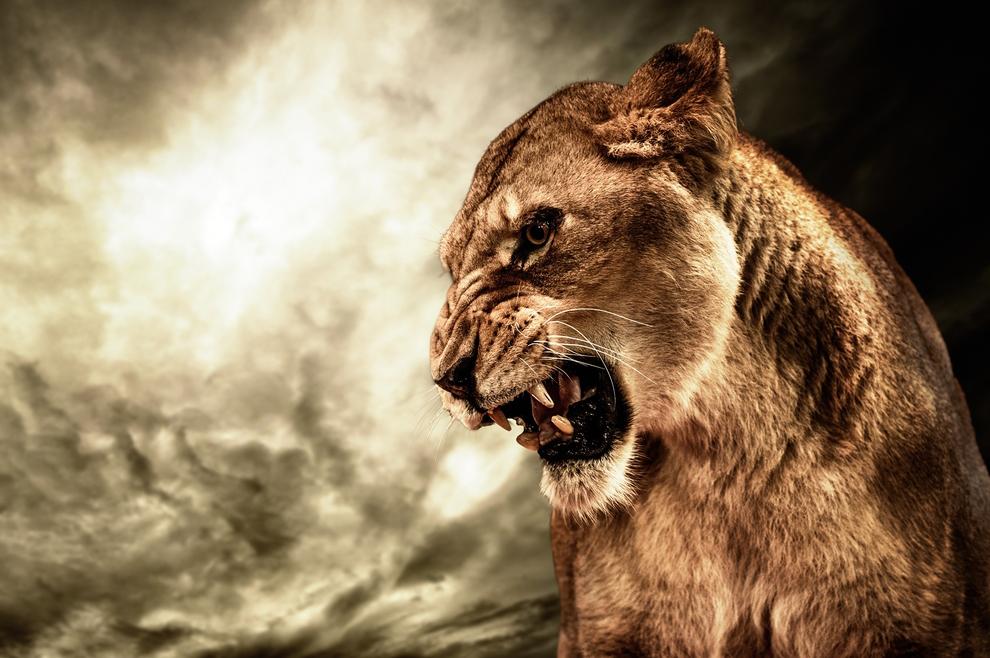 Može li u životinju ući zli duh