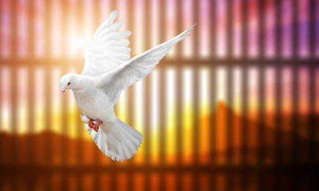 Dati slobodu ptici zatočenoj