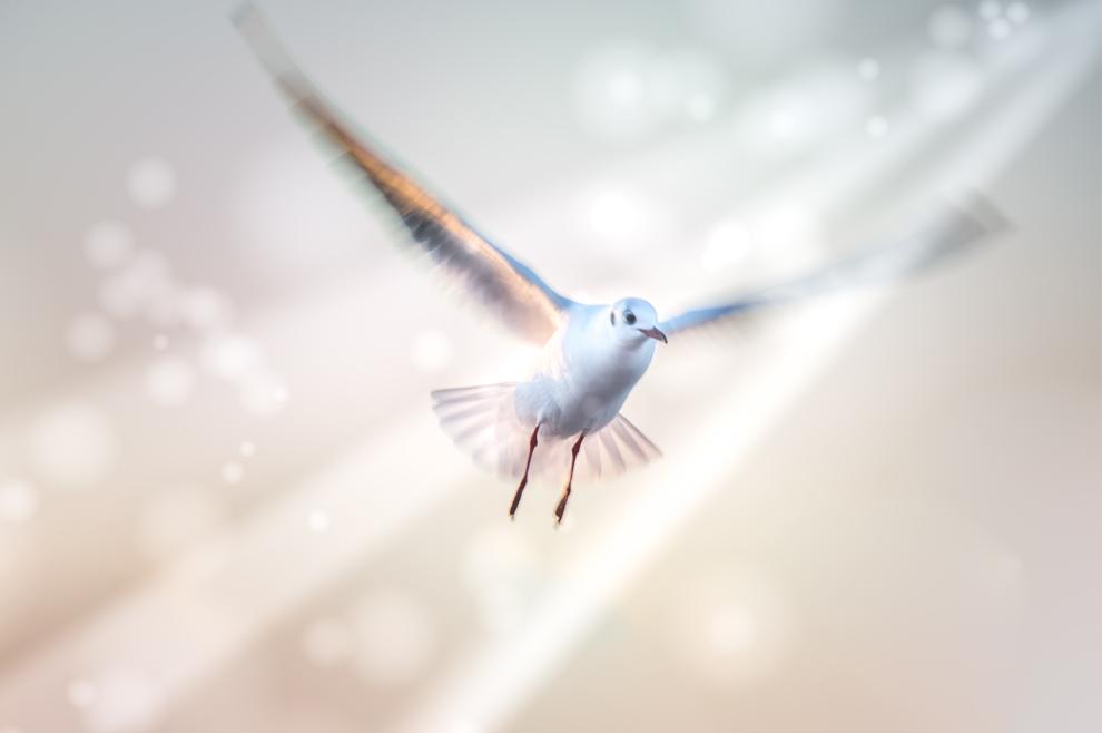 Kako Duh Sveti djeluje u životu vjernika?