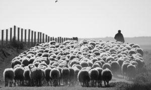 Pastirova tajna