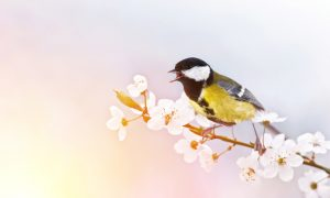 Jeste li ikada vidjeli pticu da doživljava živčani slom brinući se što će danas jesti!