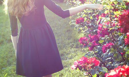 Ruža iz ružičnjaka staroga mudraca