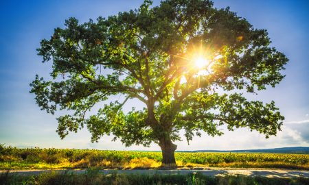 fra Tomislav Pervan Kako u nama raste Kraljevstvo Božje