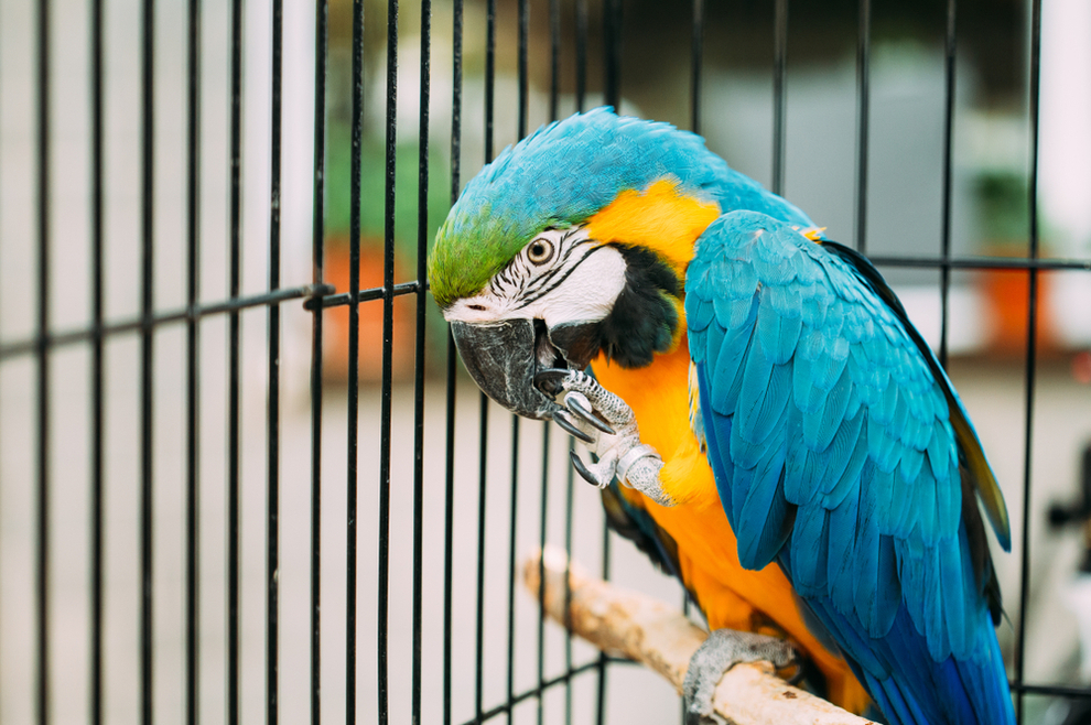 Papagaj i alkoholičar