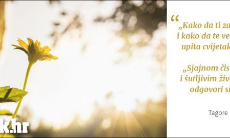 Cvijet i sunce