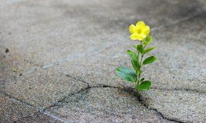 Kada naša vjera raste?