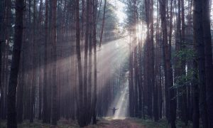 Obraćenje je razotkrivanje istine i puta kojim nam je ići