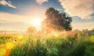 Kad jutro zamiriše na sunce, toplinu i radost