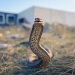 Sanjate li zmije? (3.)
