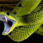 Sanjate li zmije? (2.)