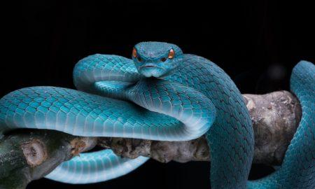 Sanjate li zmije?