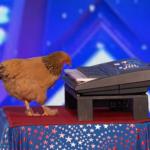 SUPERTALENT Nećete vjerovati kako ova kokoš svira