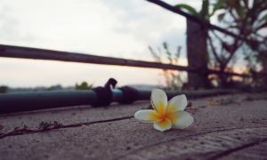 Životni neuspjesi, gubitak obitelji, posla, odbačenost… Gdje tražimo sreću kada se sve ruši?