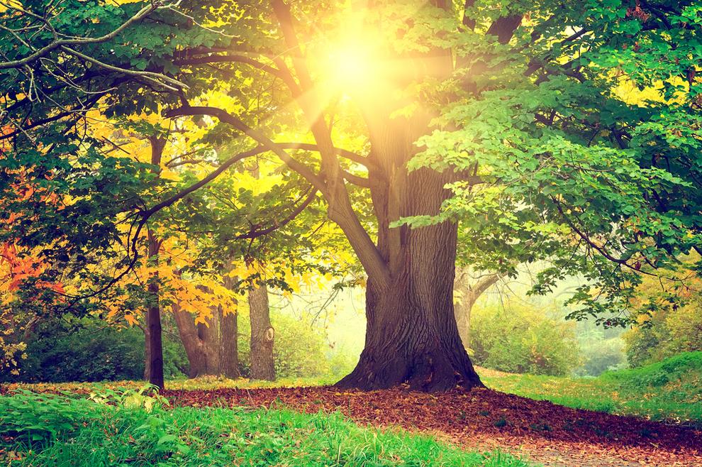 Ima li u nebu drveća