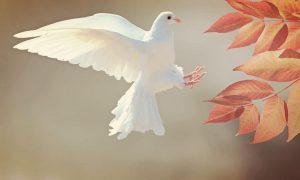 Evo dva važna razloga zašto moramo moliti za izlijevanje Duha