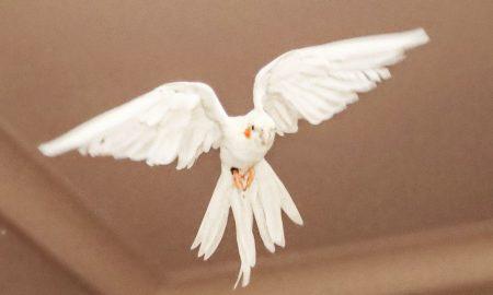 NEMOGUĆE ČUDO, ALI DOGODILO SE! U dvorani se pojavila velika golubica, s rasponom krila od 10-15 metara