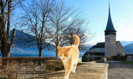 Ulična rimska mačka koja je postala najpoznatija mačka na svijetu