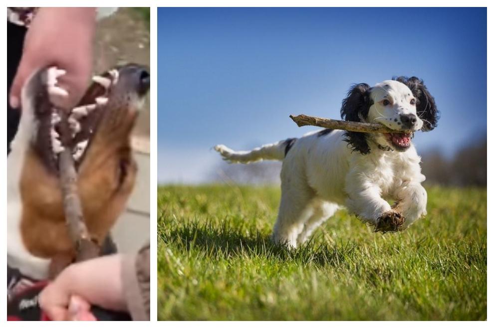 VIDEO Pas ne da svoj štap makar morao visjeti s njim