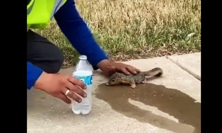 VIDEO Tko želi pomoći nađe način