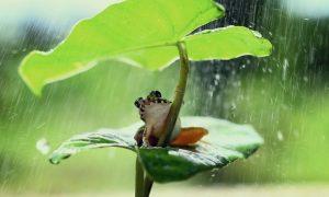 "Kućni ljubimac, žaba Bayum i starac Pajsije bi zajedno svake večeri ""pjevali psalme"" i molili pred križem"