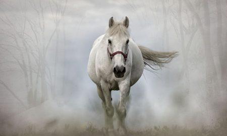 Zaglavljen konj