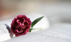 7 koraka biblijske meditacije
