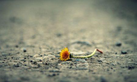 Tuga i zabrinutost