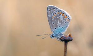 'Kriza je mjesto iz kojeg polijeće leptir'